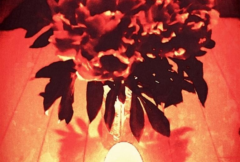灯りと芍薬
