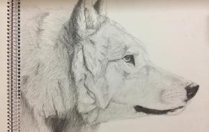 オオカミ(デッサン) - RINA