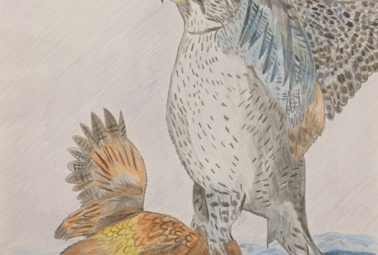 シロハヤブサと獲物