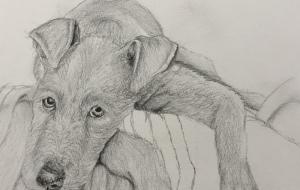 犬のデッサン - RINA