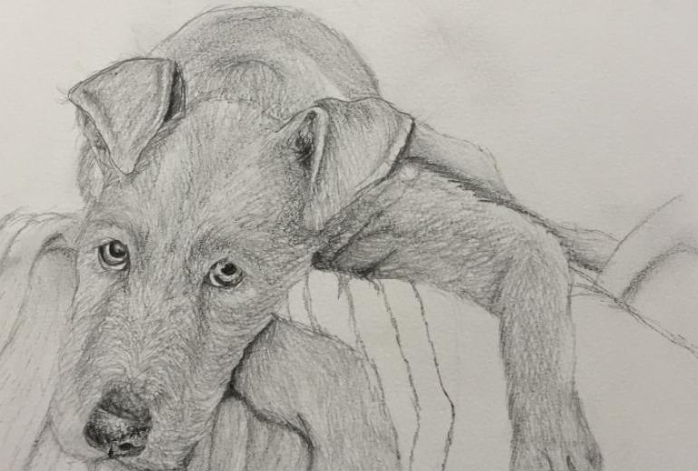 犬のデッサン