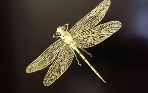 蜻蛉 - jun