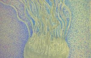 jellyfish - jun