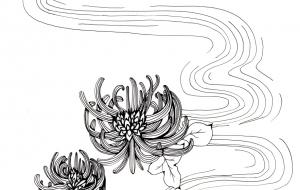 菊花 - キナコモチコ