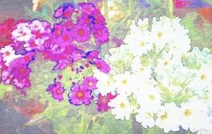 小さな花2 - 相田朋子