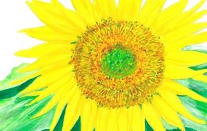 sunflower - 高桑聡一