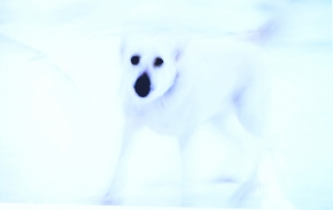 白い犬 - ナリタマサヒロ