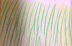 ススキ - 水樹