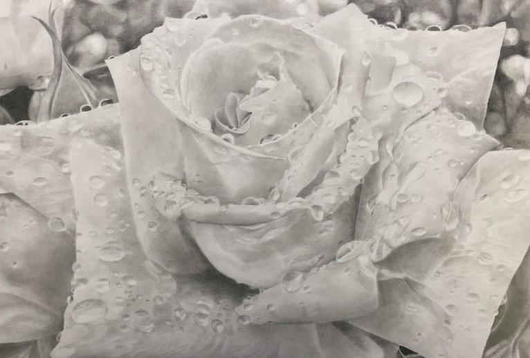 Rose blanche - 大神