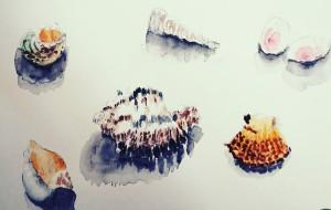 貝殻 - 北村まど香