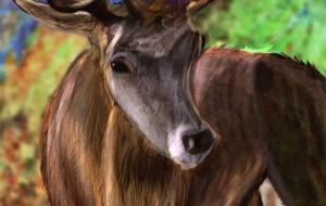 Deer - 中澤悠樹