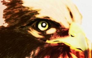 猛禽2 - 道人