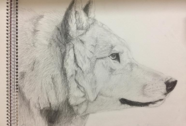 オオカミ(デッサン)