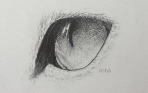 猫の目(デッサン) - RINA