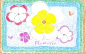 プルメリア - asami