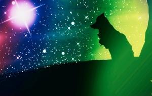 オオカミの夜 - 相田朋子