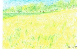 菜の花畑 - minko