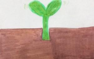 大地の恵み - 水樹
