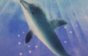 イルカ - なおみ