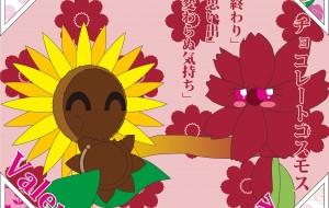 恥かしがり屋なチョコレートコスモスとバレンタイン・フラワー - ブルーム