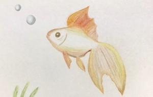 金魚① -