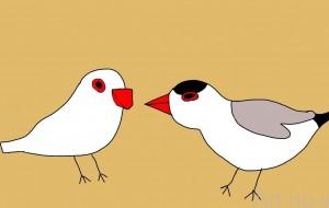 文鳥 - subaru