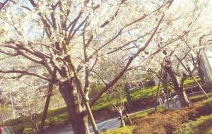 咲いたね、咲いたよ。 - 命(みこと)