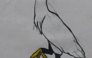 1羽のコサギ - SAYAKA