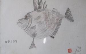 かがみ鯛 - マサミ