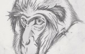 老猿 - 道人