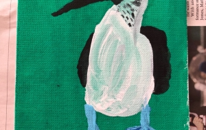 A blue-footed booby - Yugo