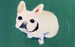 My french bulldog - Yugo