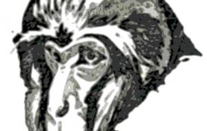 老猿モノクロ - 道人