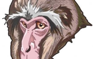 老猿カラー1 - 道人