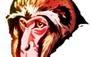 老猿カラー2 - 道人