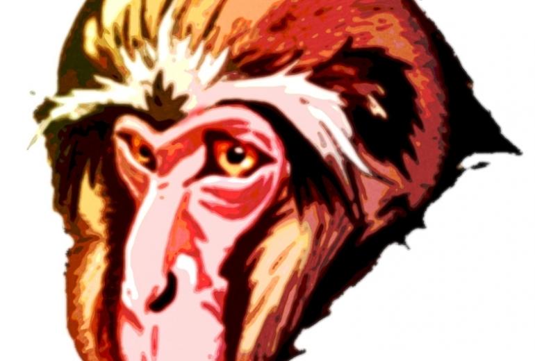 老猿カラー2