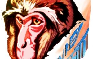 老猿カラーMonkey graffiti - 道人