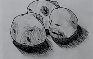 ジャガイモのデッサン - SAYAKA