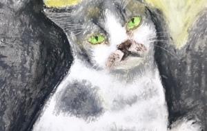 似島で出会った猫 - おが