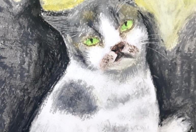 似島で出会った猫