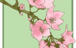 桜 - はちわれ