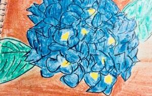 紫陽花 - 水樹