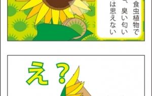 ペーパースタンド・フラワーペーパースタンド・フラワー(4コマ漫画) - ブルーム