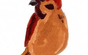 雀 - 小林葉子