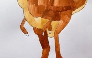 かっこいい恐竜 - 太一