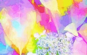 雨の後の紫陽花 - 相田朋子