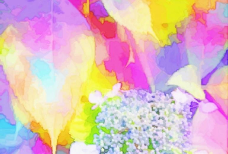雨の後の紫陽花