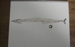 秋刀魚の骨 - KEISUKE