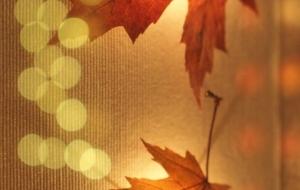 きらめく秋 - tokochan♪