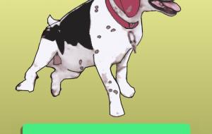犬のジャック - みぎい@